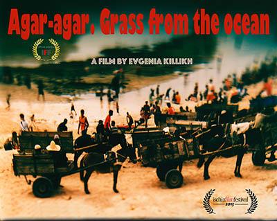 Agar-agar. Grass from the ocean