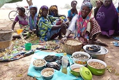 Burkinabè Bounty: Agroecology in Burkina Faso